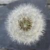 FloraNature