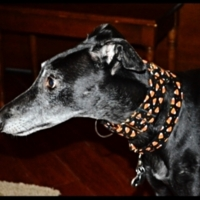 Martingale Collar and Tag