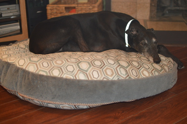 no pattern used dog bed cover (costco round dog beg) pattern